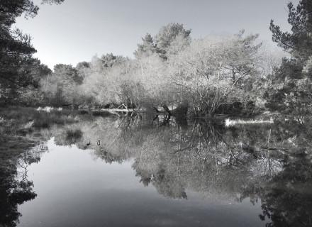 Dorset_professional_photographer